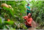 宁夏生态扶贫2年内将带动13万多贫困人口