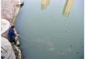 鱼塘天天都死鱼 村民自费检测水质后吓一跳