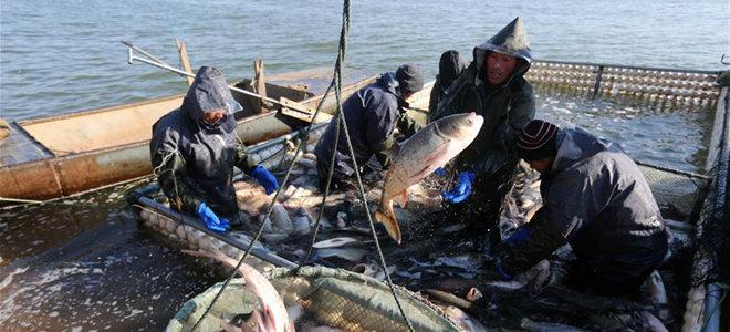 沂南:鱼跃人欢冬捕忙