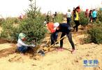 河北群众自发植树造林还可以领取补贴?具体补助是这么多