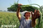 今年河北将新创建30个省级特色农产品优势区