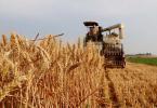 全国小麦机收率96%创新高