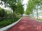 贾鲁河治理生态绿化工程主体工程今年年底完工