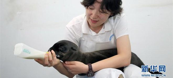 山东烟台:新生小海狮首次亮相