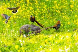 信阳董寨国家级自然保护区再次荣获国家级称号!