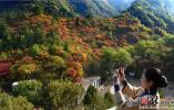 井陉:仙台山漫山红叶好个秋