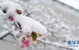 """""""大雪""""将至 气温陡降 石家庄市区飘起雪花"""