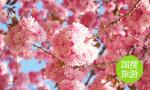 济南市属公园景区推出新春游园活动