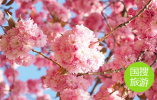 济南市属公园景区推出32项新春主题游园活动