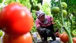 聚焦山东经济:链条承压 农产品产供销如何应变
