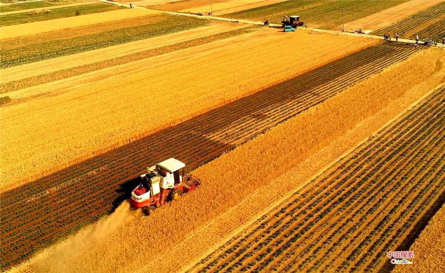 南陽宛城區:高標準糧田保障糧食安全