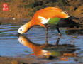 大连玉兔岛生态环境良好 有孔雀、兔子、鹿等野生动物