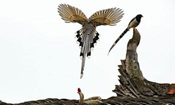 蛇与鸟生死大战