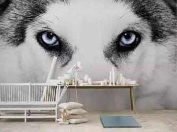 细致的狼头,两只炯炯有神的眼睛里流露着满满的光芒。白色的毛与旁边的白色装饰柜浑然一体,好似活了一般。