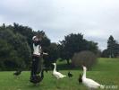 62岁刘晓庆晒澳洲游玩照 与天鹅互动身体轻盈似少女