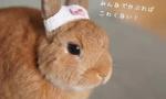 """头戴""""内裤帽""""的兔子"""