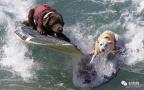 狗狗冲浪比赛:看完感觉太羡慕这些狗子了!