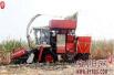 河南汤阴县伏道镇大力推广玉米秸秆青贮技术