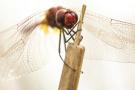 昆虫的奇妙世界