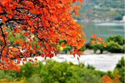 10个免费赏红叶的自然风光