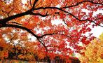中国最适合观赏红叶之地