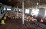 辽宁集中整治畜禽养殖业无证无照经营