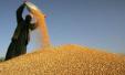 国家公布2018年小麦最低收购价格