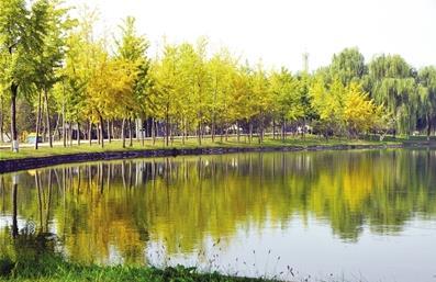 黄栌、火炬、红枫、银杏 去植物园看斑斓秋色