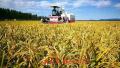 冰城秋收工作已经全面告捷 水稻、大豆等农作物大丰收