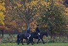 英女王雨中骑马