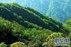 平顶山市林业生态建设工作会议召开