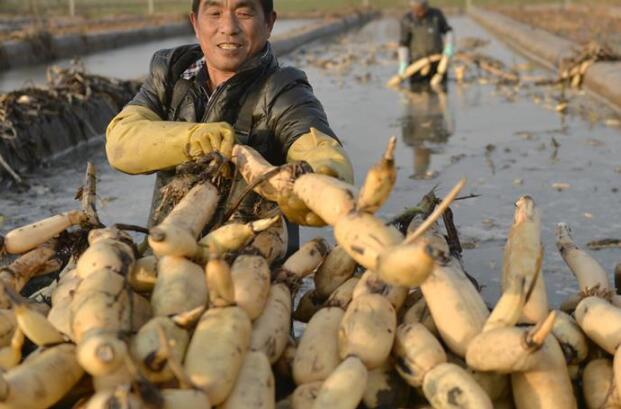 农民冬闲变冬忙