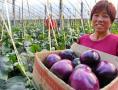 反季蔬菜助农增收