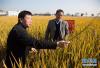 """科技奖3项授予""""水稻科学家"""":百姓饭碗将发生哪些革命?"""