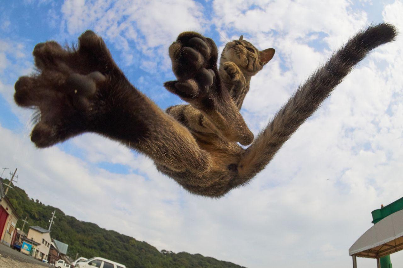 李小龙附体的功夫猫
