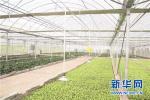 武邑县引导农民规模化 产业集群化发展蔬菜大棚