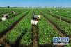 廊坊市农业局深入谋划2018年农业重点工作