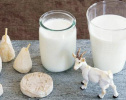 """乳企转型扎堆羊奶粉 """"纯羊""""概念成为新卖点"""