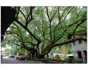 """寒来暑往 庆元""""小香港""""的大樟树下有没有你的故事?"""