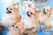 南沙百万葵园景区的狗狗小天地得到大量游客的喜爱