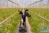 济南将培育农业