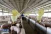 山东环保督察整改再落实:疏堵结合 化解畜禽养殖污染