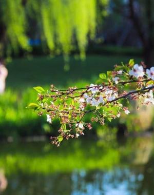 春暖花开 踏青赏景正当时