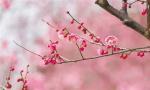 春风送暖 万物复苏