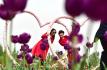 枣庄:观花赏景度周末
