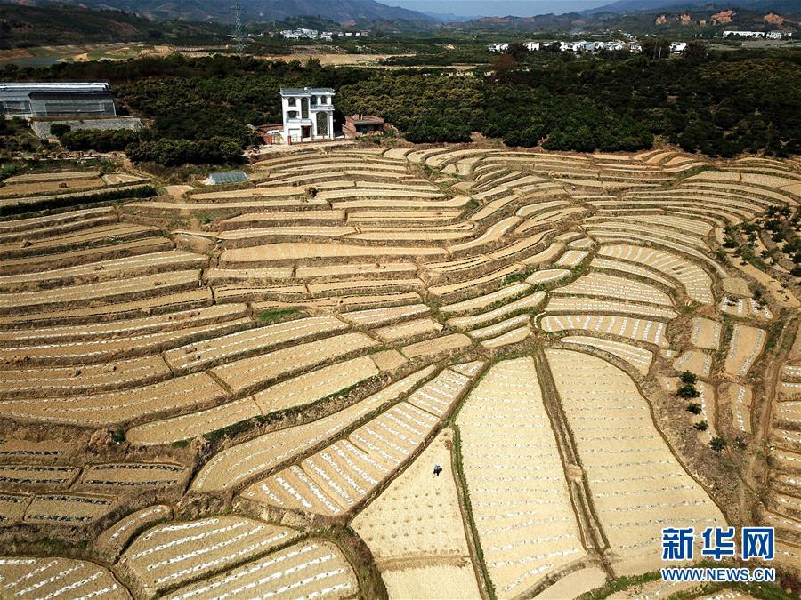 重庆时时彩新规律公式:中国科研团队发现调控水稻高产的新机理