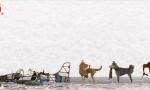 《犬之岛》官方观影指南 不建议12岁以下人群观看