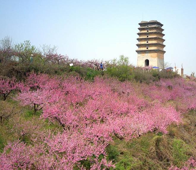 五一假期去西安看春日桃花 灿若云霞如仙境