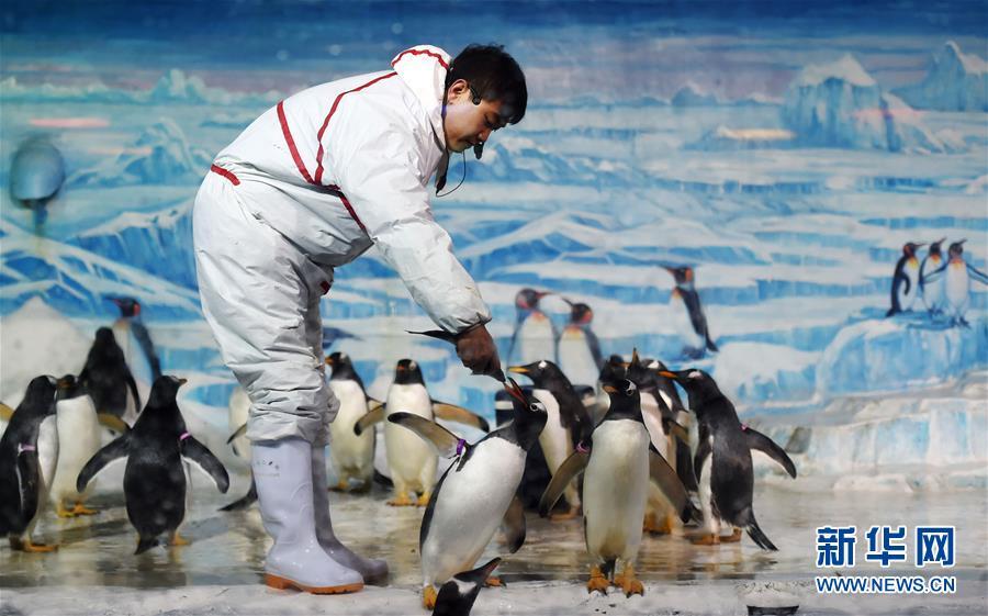 萌化了!企鹅情景剧