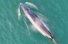 北海拟打造鲸鱼之乡